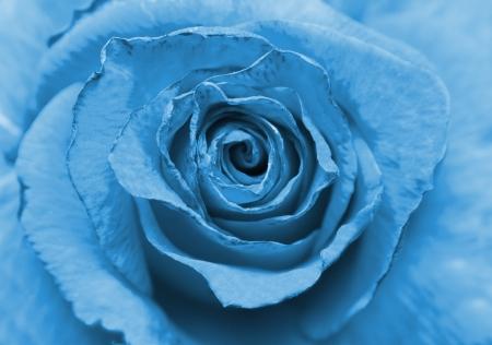 blue old rose