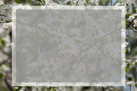 almond bud: apple flowers and buds blooming at spring with box for text