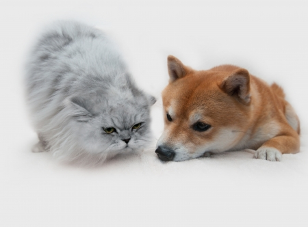 Dog and cat isolated on white photo