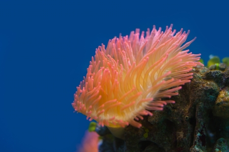 Colorful coral reef background photo