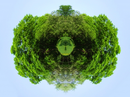 eco tree planet photo