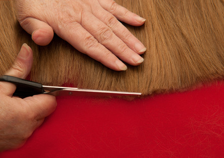 Stylist cutting split ends photo