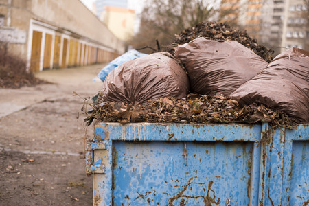 environmental sanitation: Autumn leaves in a garbage can