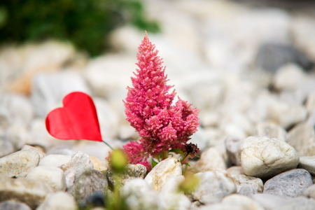 pink flower with red heart