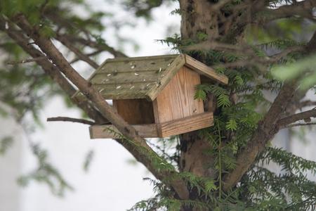 Little birdhouse in a tree