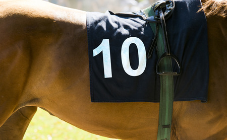 number 10: Horse racing, close up on brown horse with number 10