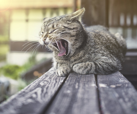 meowing: adorable meowing cat outdoors on wood Stock Photo