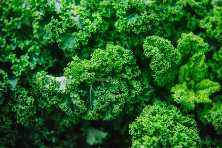 Close up on kale, green background or texture Stock Photo