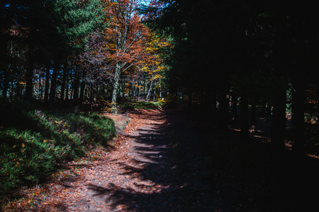 pathway in the autumn forest, colorful trees Stock Photo