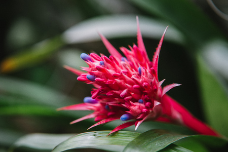 Close up on bromeliaceae  leaf, top view Stock Photo