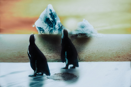 penguin in the snow and ice, sunset with cracking iceberg, global warming concept