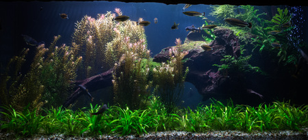 ions: close up on green fresh water aquarium