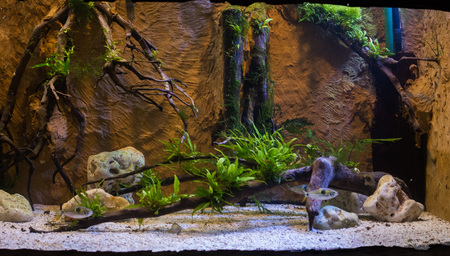 close up on green fresh water aquarium