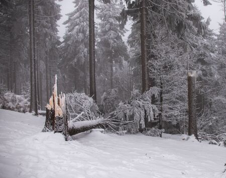 natural winter background - forest