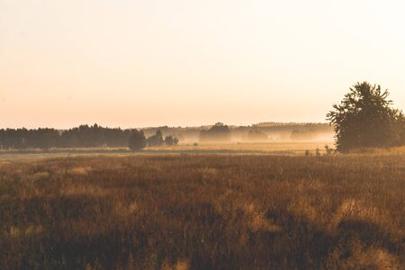 sunrise over a misty meadow in summer morning Stok Fotoğraf