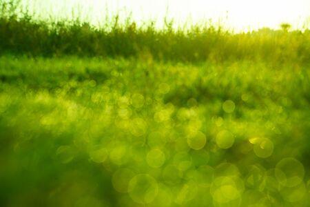 background of dew drops on bright green grass, defocused Stok Fotoğraf