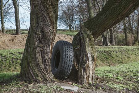 old tire left in the forest, garbage