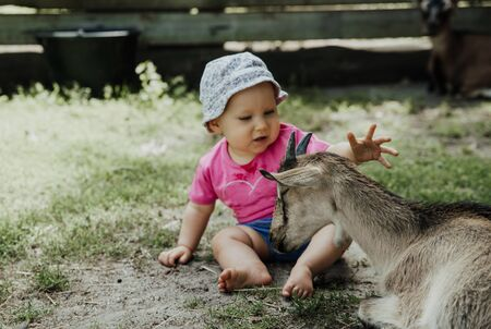 young goat and baby have fun in farm