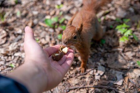 feeding a squirrel, close up on hand