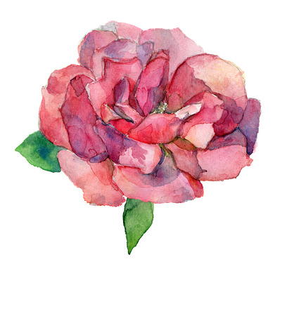 bitmap: Red or pink rose flower watercolor drawing isolated JPG raster bitmap Stock Photo
