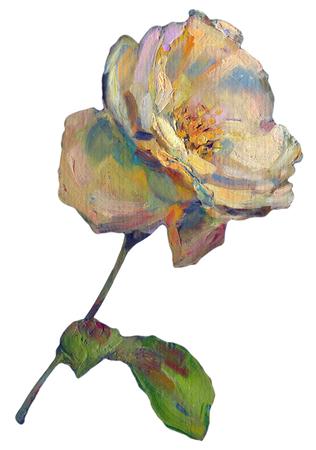orange rose: Beautiful colorful light yellow orange Rose Flower isolated on white background. oil painting illustration on canvas Stock Photo