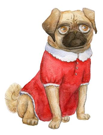 Pug portrait, mops girl, cutie -dog in a cute red dress