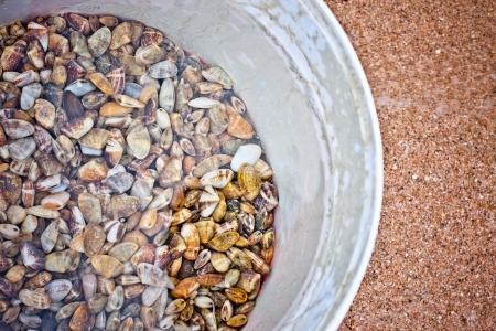 fischerei: Schalentiere ist ein kulinarisches und Fischerei Begriff f�r Exoskelett-Lager wirbellose Wassertiere als Nahrung genutzt, unter anderem verschiedene Arten von Weichtieren, Krebstieren und Stachelh�uter