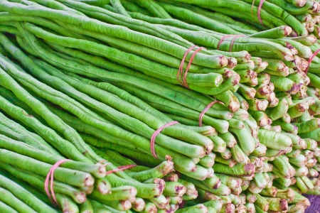 strikingly: This plant is of a different genus than the common bean  It is a vigorous climbing annual vine  A variety of the cowpea, it is grown primarily for its strikingly long  35-75 cm  immature pods and has uses very similar to that of the green bean  Stock Photo