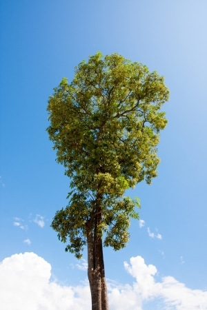 The single tree from nature with sky photo