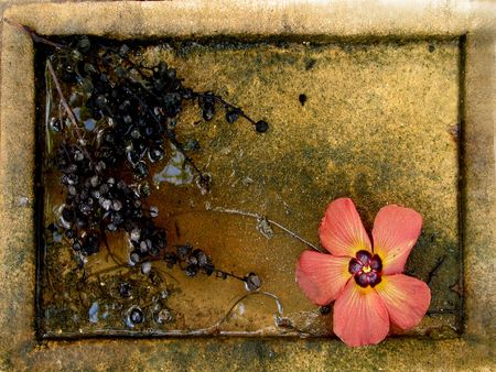 dampness: rain water in the clay dish, dried up cluster of grapes and the fallen down flower