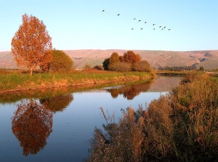 Autumn landscape, cranes fly on the south photo