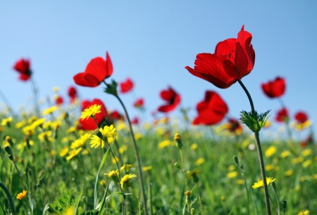 anemone flower: Anemones bloom on the sky background Stock Photo