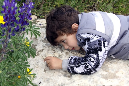 observations: little boy lies on a rock and watching ants