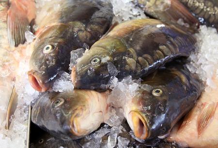 mirror carp: Mirror carp in the ice on the market stall