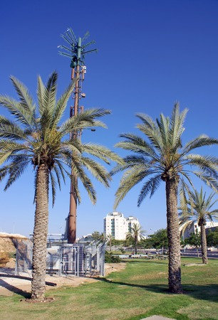 disguised: Cellular antenna disguised as a palm tree in a city park