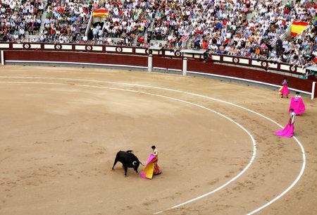 teases: MADRID, SPAIN - OCTOBER 05, 2013: Korrida in Madrid. Matador teases bull with muleta Editorial
