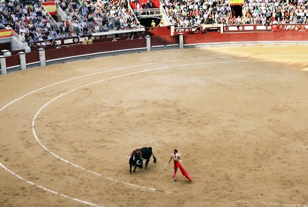 matador: MADRID, SPAIN - OCTOBER 05, 2013: Korrida in Madrid. Matador teases bull with muleta Editorial
