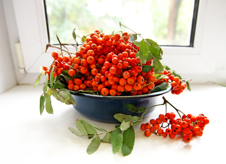 windowsill: Bowl with Ashberries stands on the windowsill