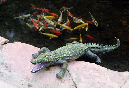 lies: Green Plastic Crocodile lies on the bank of a pond with goldfish