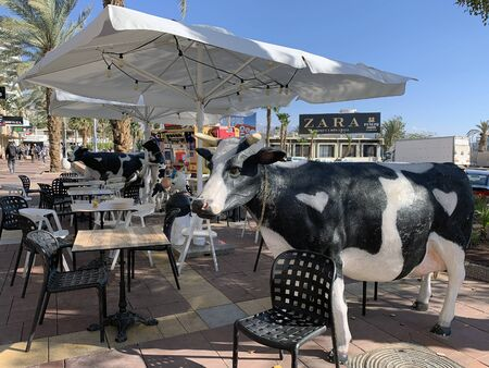 EILAT, ISRAEL - MARCH 03, 2019: Cafe ice cream with figures of cows from Kibbutz Yotvat on the waterfront in Eilat Editorial