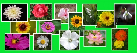 advertizing: collage from flowers