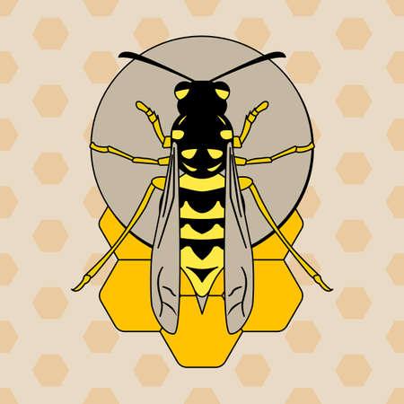 Wasp on honeycombs illustration on light background. Illustration