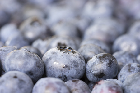 luscious: Close-up of a pile of Blueberries (side view) Stock Photo