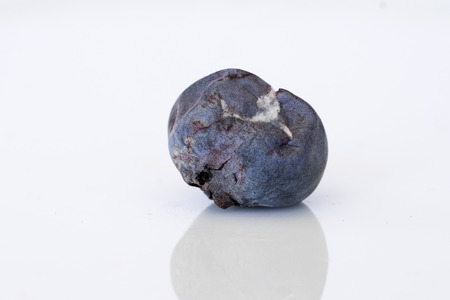 icky: Close-up of decaying, molded blueberry (side view) Stock Photo
