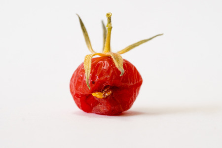Close-up of overripe and torn wild tomato I