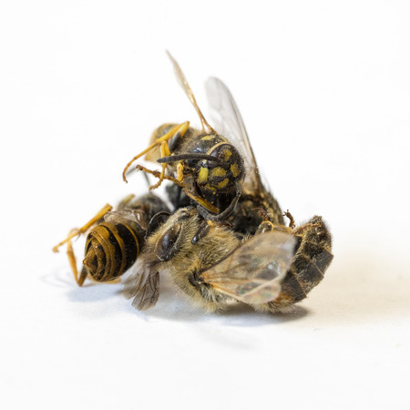 Pile of dead insects on white background VI