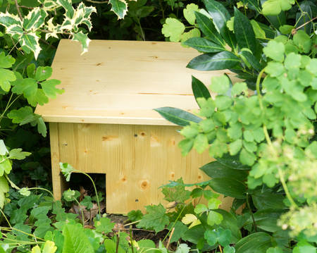 Do it yourself hedgehog shelter under bushes I