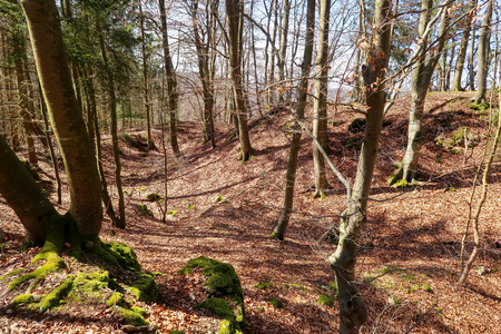 Old moat at castle remains Saufelsen close to Beilngries, Germany