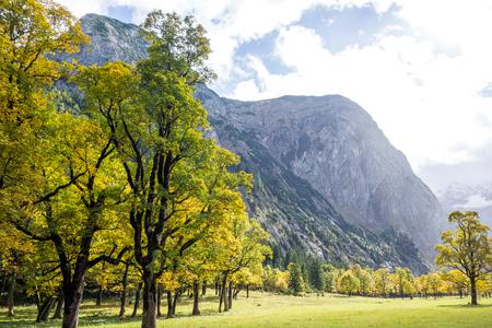 Sycamore Trees in Ahornboden valley in Tyrol, Austria Foto de archivo