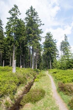 """Hiking path Channel """"Clausthaler Flutgraben"""" Reklamní fotografie"""